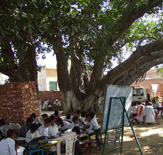 tree-pakistan